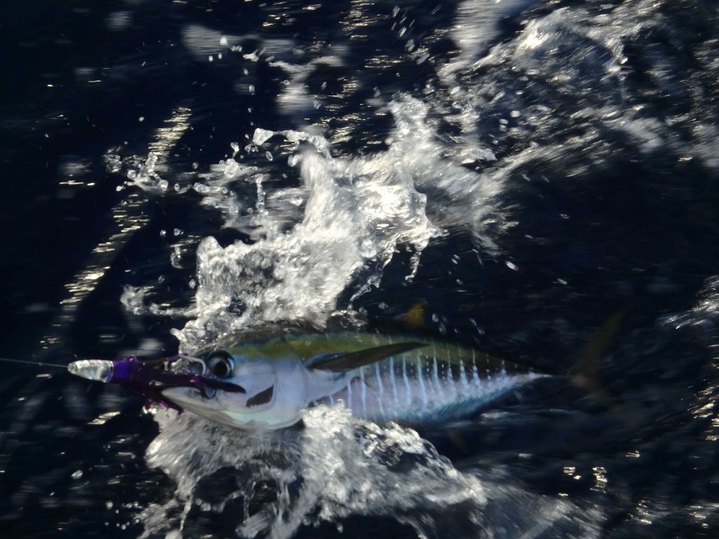 Beautiful - One of the few fish we caught on passage