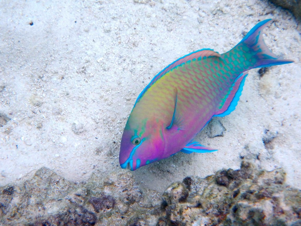 Psychedelic Fish - Seriously, this is not camouflage here people!