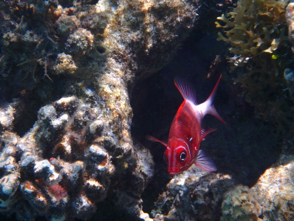 Reef Fish Series IV - The little fish is a rare one,  Sarah tracked him down