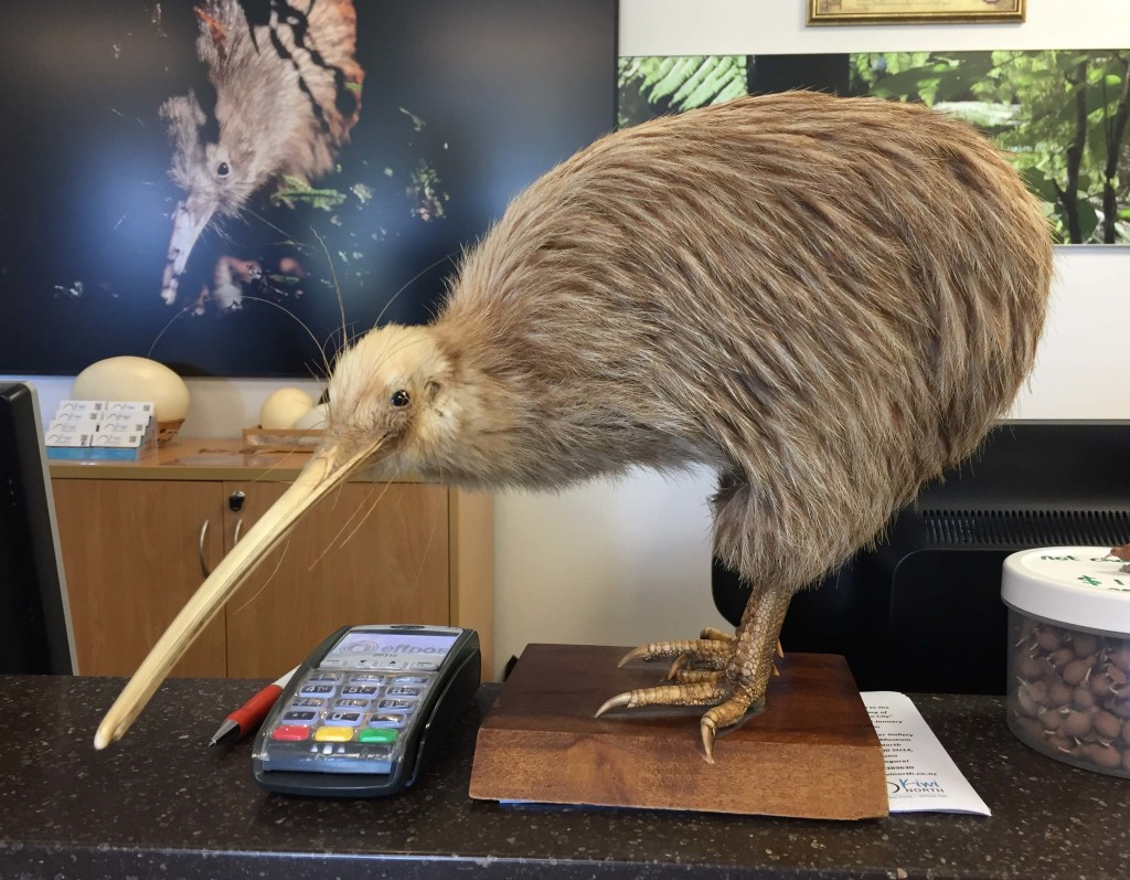 Stuffed Kiwi - Greeting entrants at Kiwi North, this stuffed kiwi is over 100 years old and still very lifelike