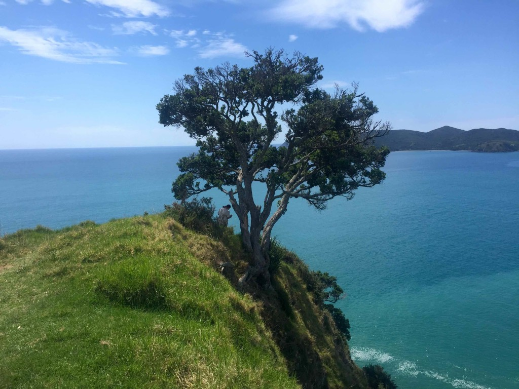 Solitary - This solitary tree provides much-needed shade in a contemplative place